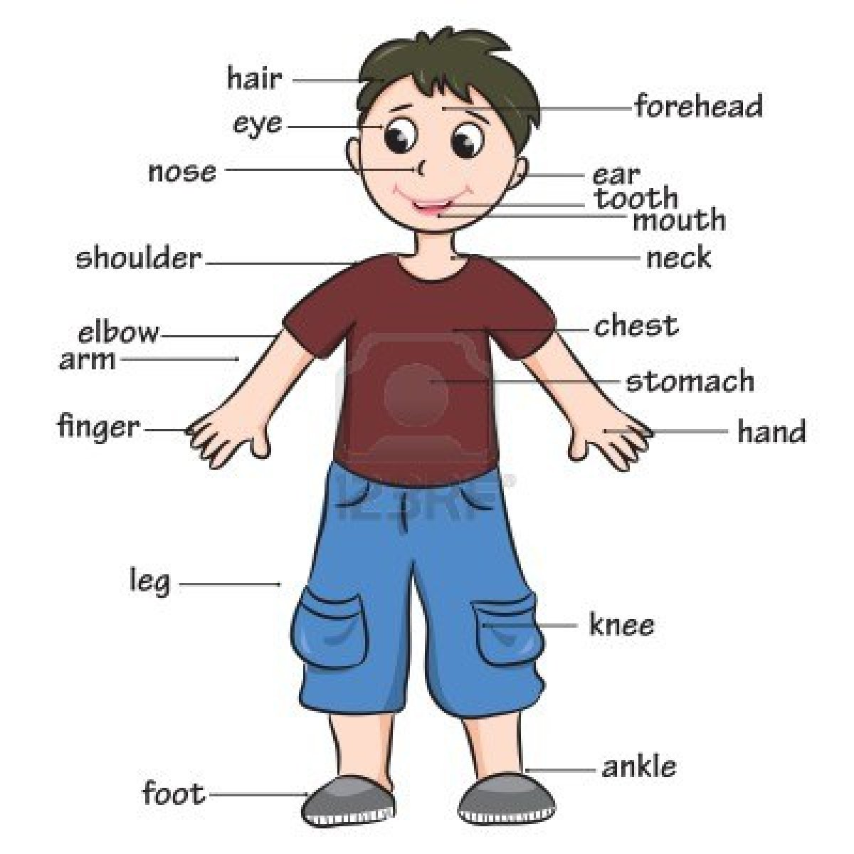 Image result for body parts