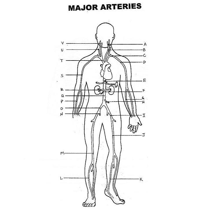 ImageQuiz: Major Arteries