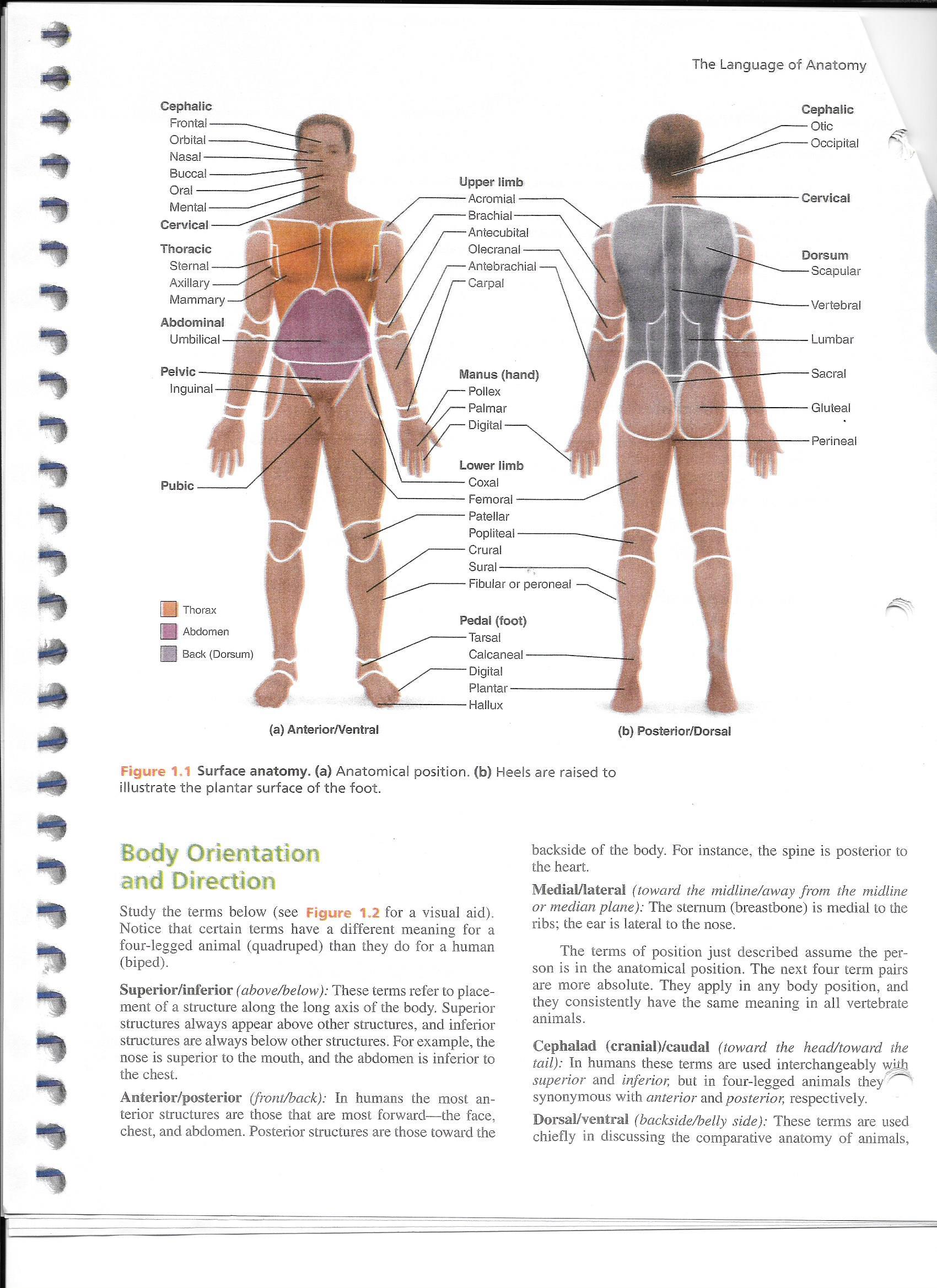 ImageQuiz: Surface Anatomy