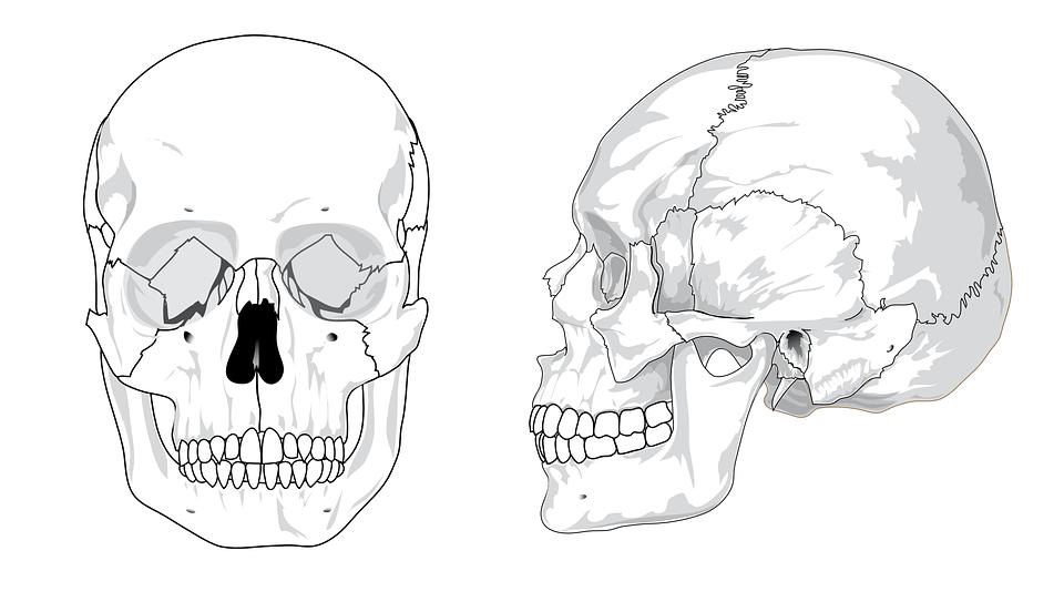 ImageQuiz: Bones-Skull