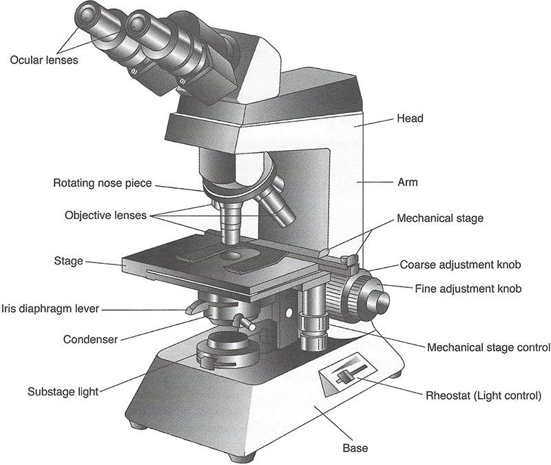 Imagequiz compound light microscope parts your browser dosent support the html5 canvas please upgrade your browser check here for a comparison of browsers ccuart Choice Image