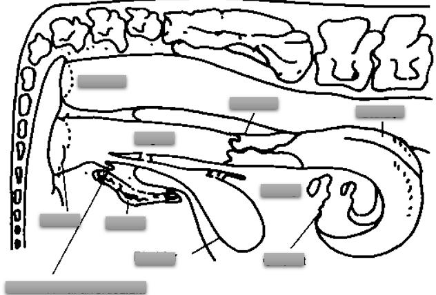 ImageQuiz: Cow Repro System